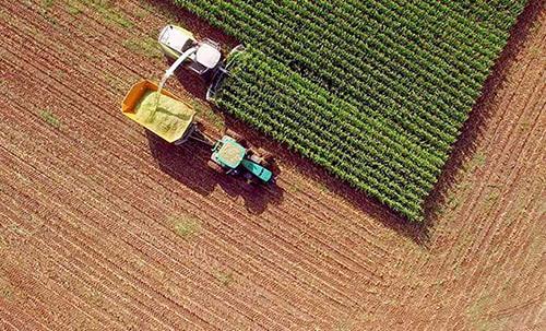 corn_harvesting_for_ethanol